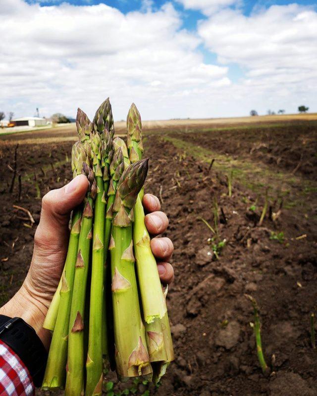 Growing Asparagus at Ely Farms, Nebraska